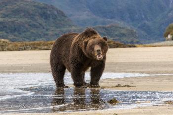 expressive-beach-bear