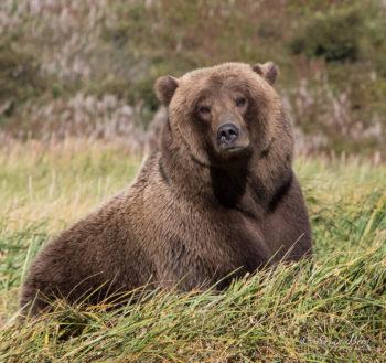 i-love-this-bear1